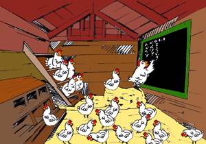 Chicken parliament